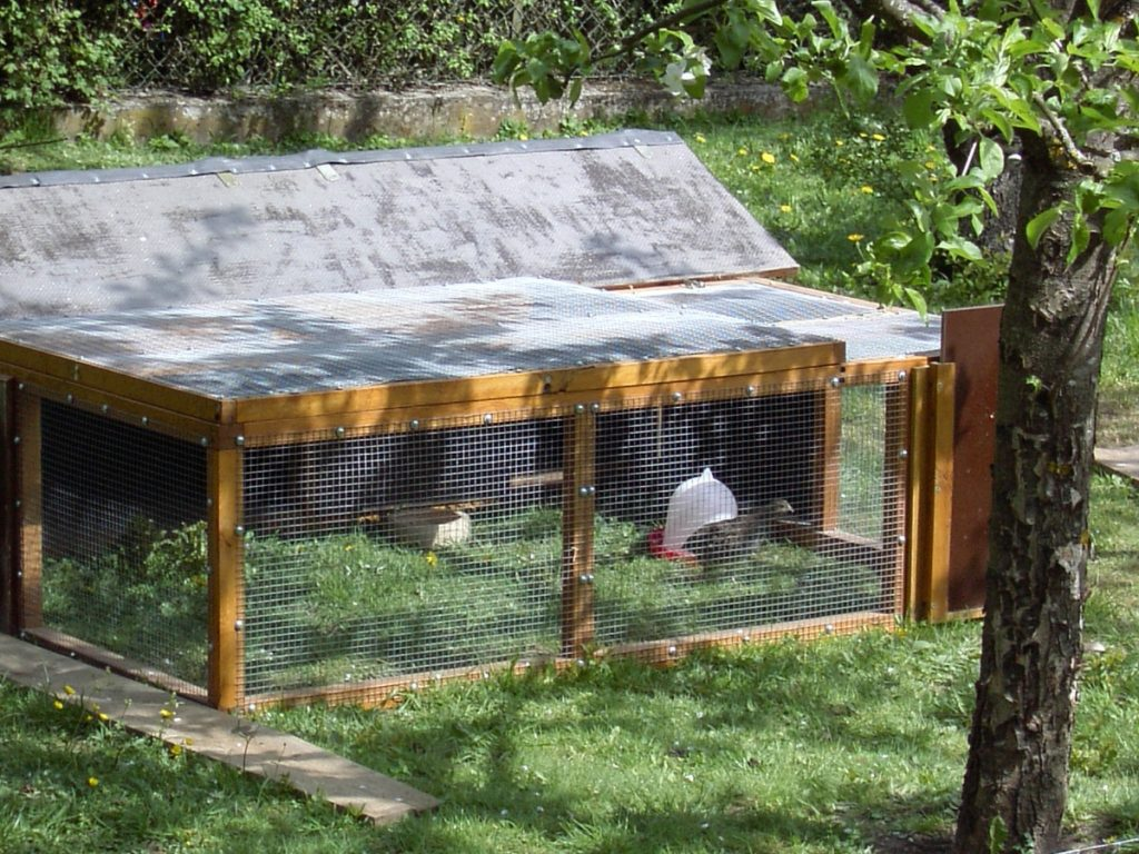 Gehege für Wachteln im Auslauf der Hühner