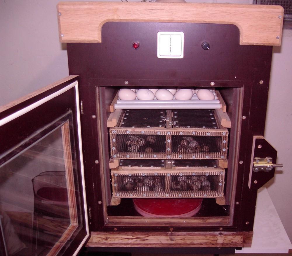 Luftfeuchtigkeit in der Brutmaschine