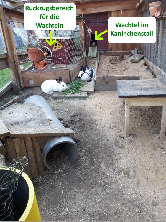 Großer Stall für Wachteln und Kaninchen