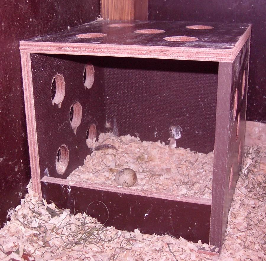 Erstes Wachtelei im Nest