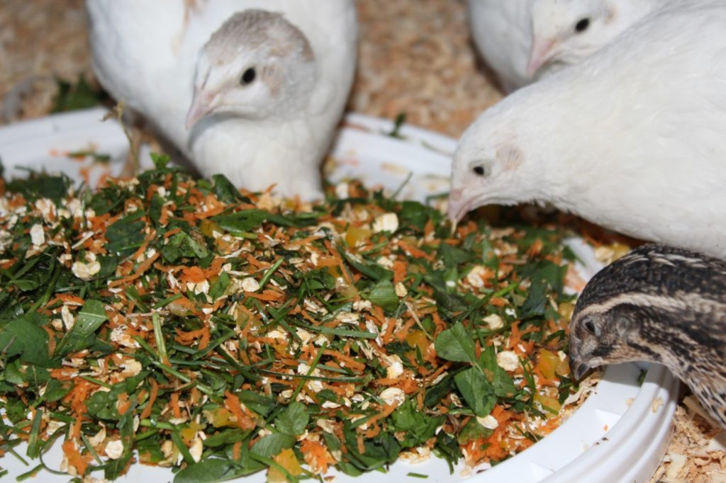 Gräser, Gemüse und Obst als Vitaminfutter für Wachteln