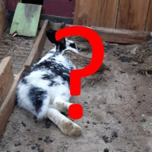 Andere Tiere-Fragen