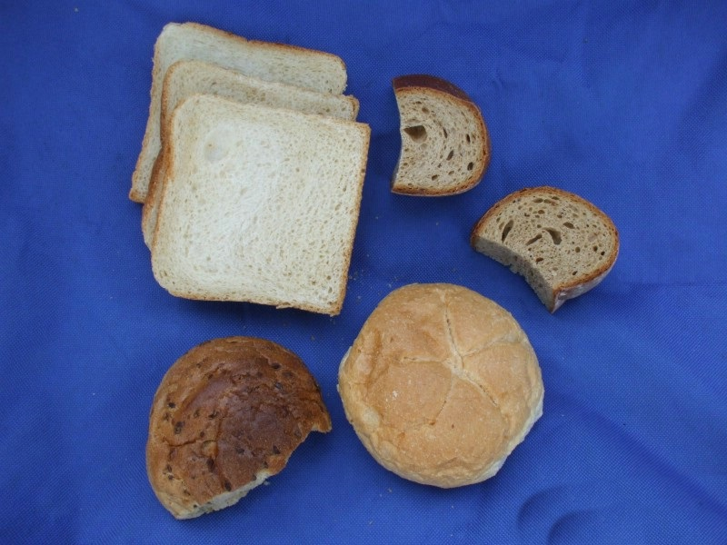 Wachteln Brot füttern